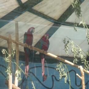 Zoo_20092000005