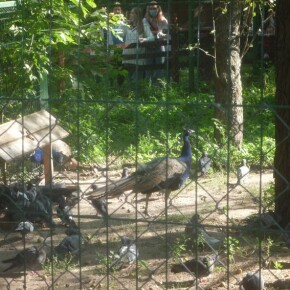 Zoo_20092000006