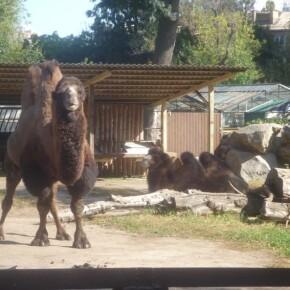 Zoo_20092000009