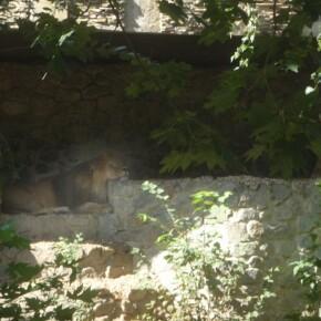 Zoo_20092000011