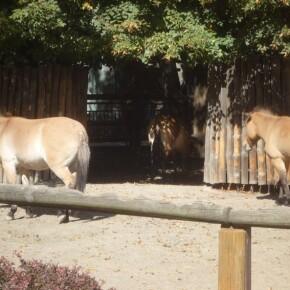 Zoo_20092000029