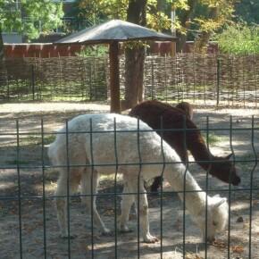 Zoo_20092000036