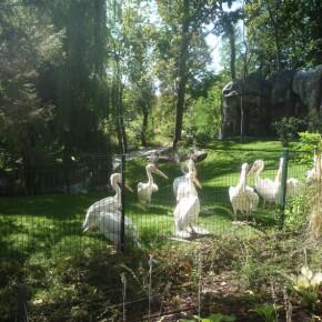 Zoo_20092000038
